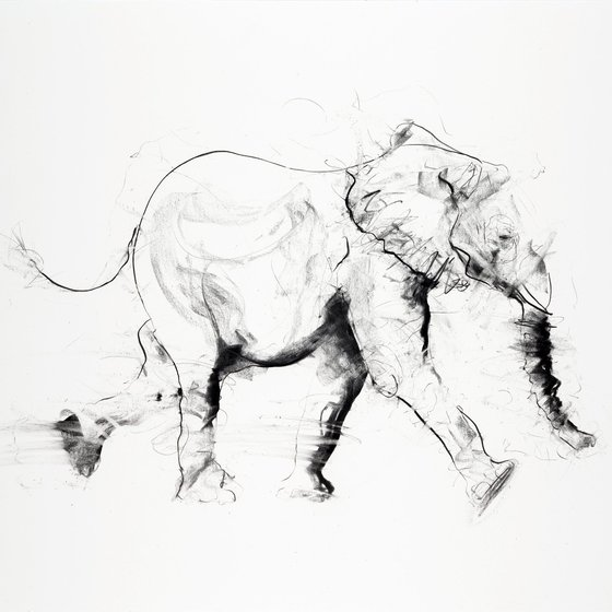 Young Elephant IV, 2013