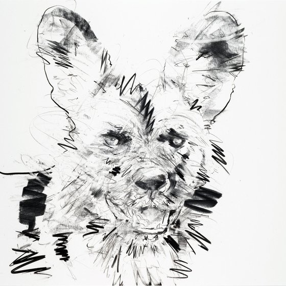 African Hunting Dog, 2013