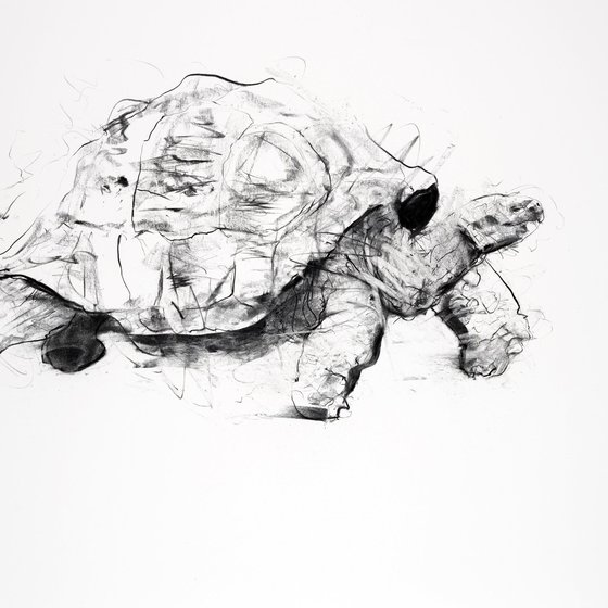 <span class=%22title%22>Tortoise<span class=%22title_comma%22>, </span></span><span class=%22year%22>2013</span>