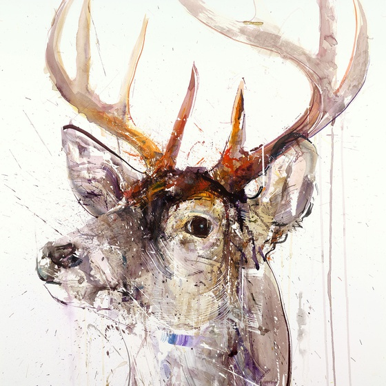 STAG I, 2015