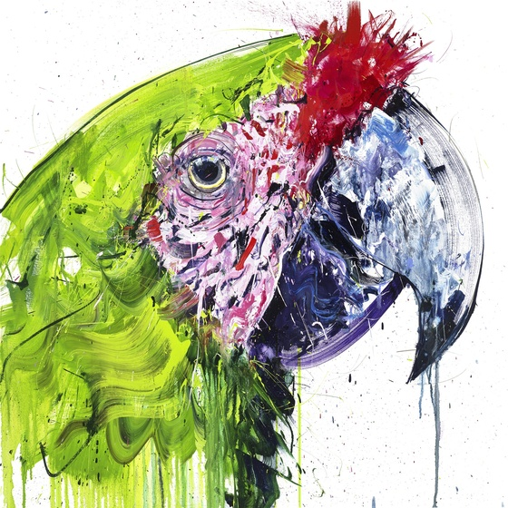 Buffon Macaw Diamond Dust