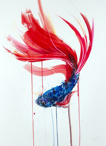 Siamese Fighting Fish II