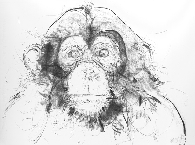 Chimp IV