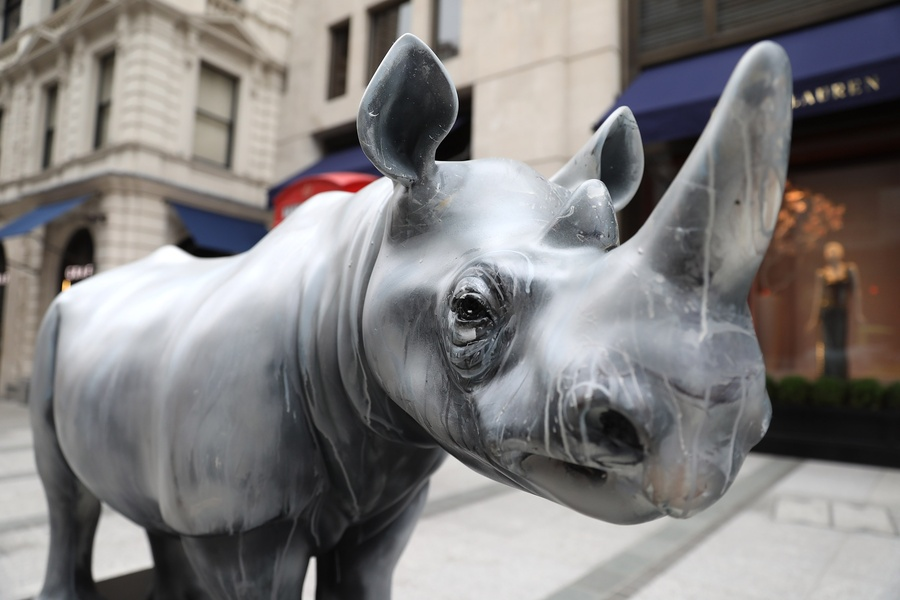 Fragile by Dave White, supported by Forevermark for the Tusk Rhino Trail© Tim Whitby for Getty